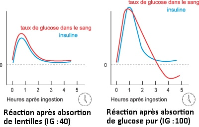Courbes de Glycemie et insulinique